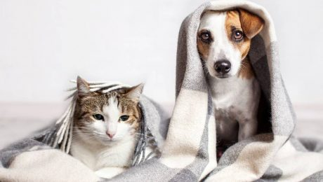Pets and HOA rules
